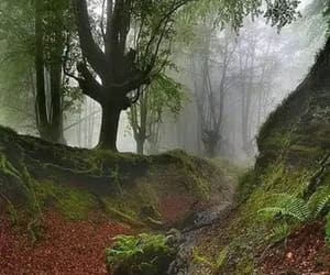 forest, nature, and niebla image