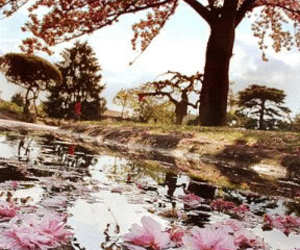 flowers, tree, and water image