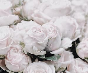 flow, roses, and flowers image