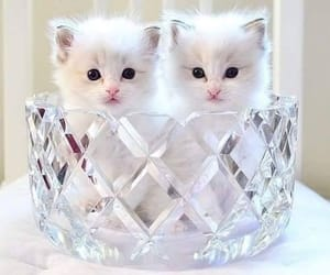 cats, kitten, and kittens image