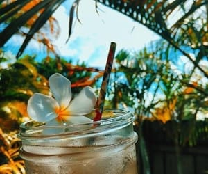 flowers, summer, and drink image