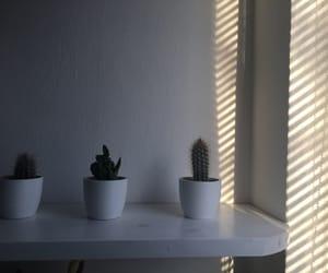 cactus, idea, and cactuses image