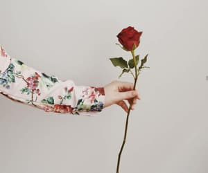 flowers, hand, and rose image