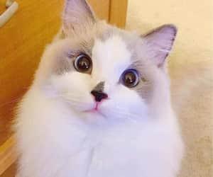 animal, gato, and cat image