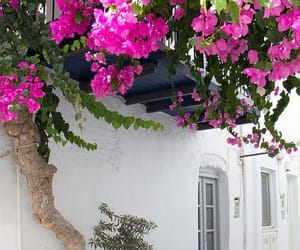 aesthetic, flowers, and Greece image