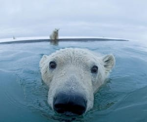 bear, funny, and cold image