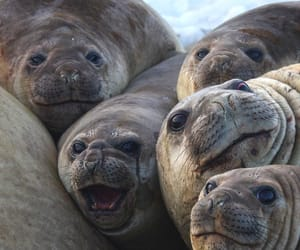 seals, a bunch, and a pod image