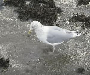 dancing, gif, and seagull image