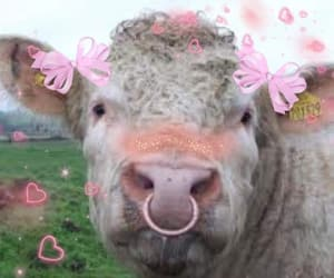 aesthetic, cow, and grunge image