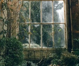 nature, plants, and window image