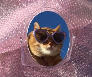 cat, glasses, and icon image