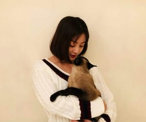 asian, cat, and twice image