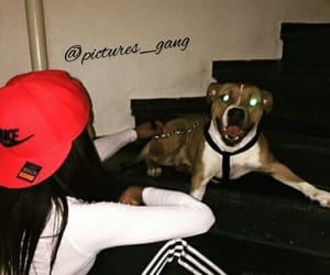 chien, pictures_gang, and nike image