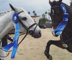 cheval, horse, and horseshow image
