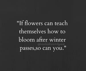 bloom, motivation, and shine image