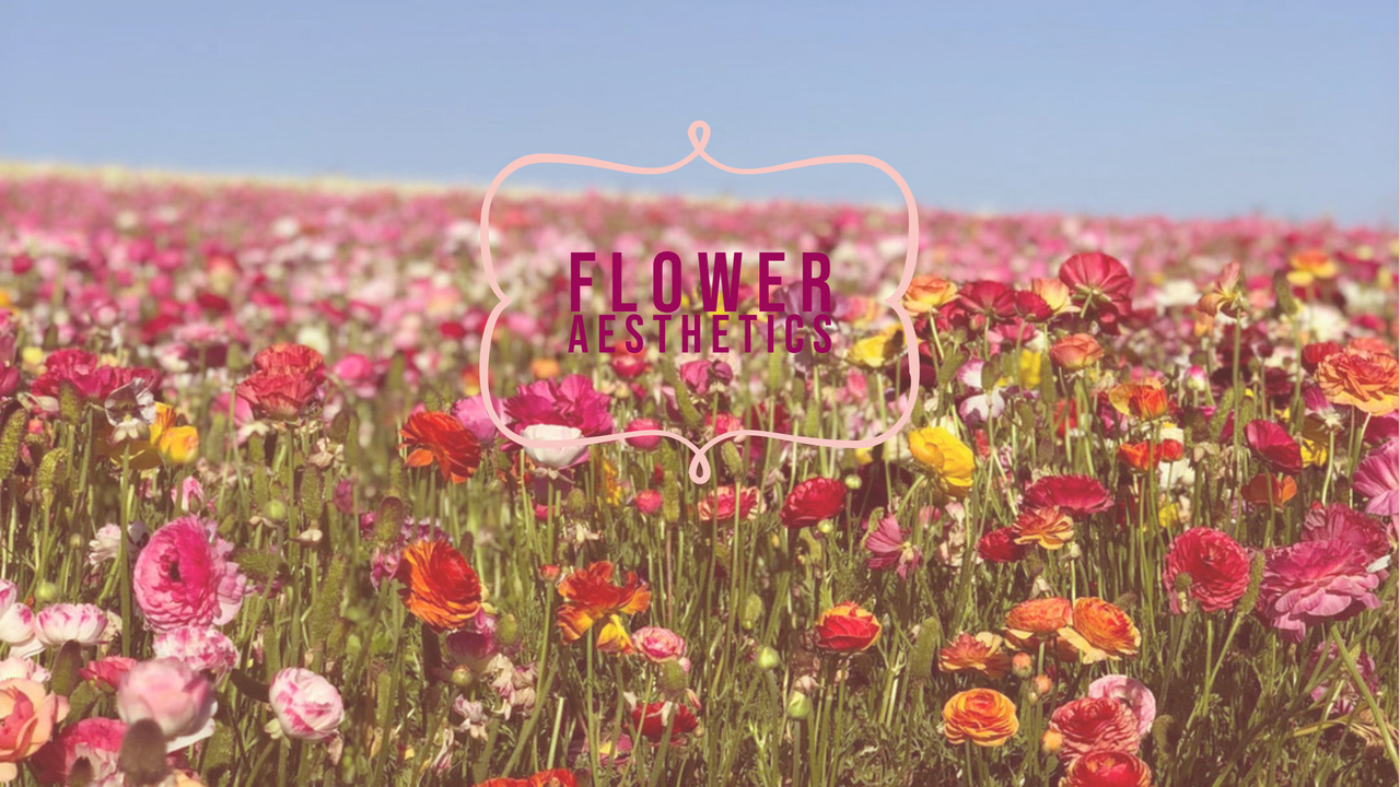 aesthetic, beautiful, and flower field image