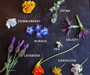 blooms, dandelion, and flowers image
