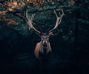 animal, nature, and wood image