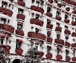 red, flowers, and architecture image