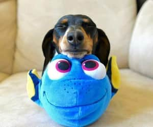 dog, dory, and cute image