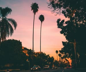 palm tree, sunset, and wallpaper image
