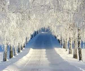 country road, freezing, and frozen image