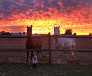 dog, horse, and horses image