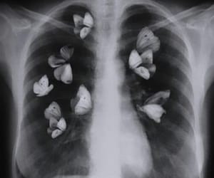 butterfly, aesthetic, and black and white image