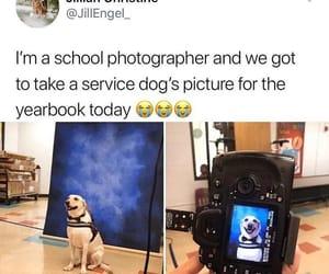9gag, adorable, and dog image