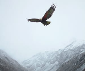 eagle, spirit, and mountains image