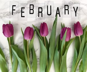 february, flowers, and purple image