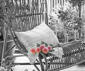 color splash, pink, and roses image