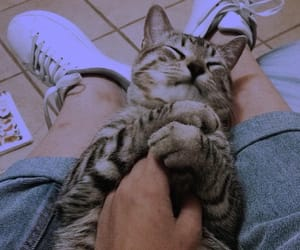 amor, felino, and Animales image