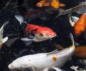 theme, dark, and fish image
