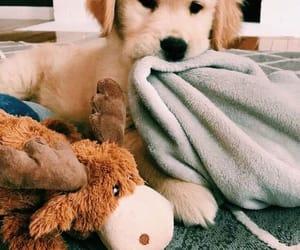 animal, dog, and puppie image