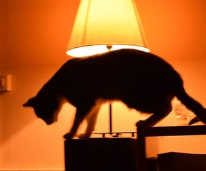 cats, glow, and lamp image