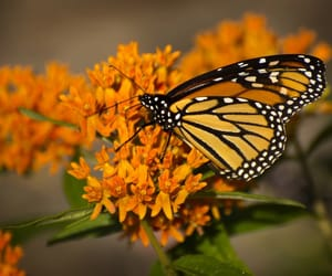 butterfly, wings, and flowers image