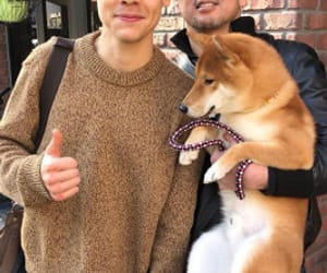 Harry Styles, one direction, and dog image