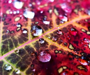 burgundy, droplets, and nature image