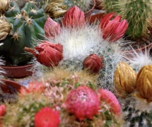 cacti, flower, and pink image