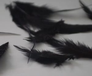 black, feather, and aesthetic image