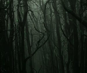 Darkness and forest image