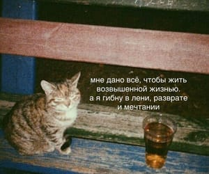 cat, lonely, and котик image