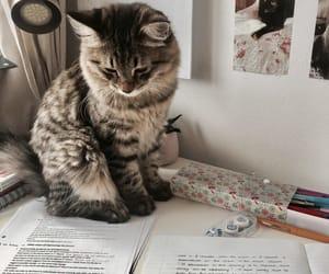 cat, animal, and study image