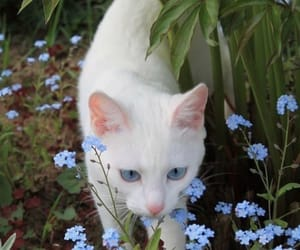 cat, flowers, and garden image