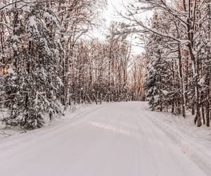 forest, white, and wonderland image