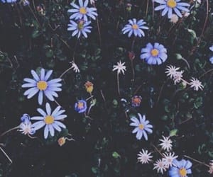 flowers, wallpaper, and photography image