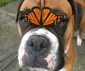dog, animals, and butterfly image