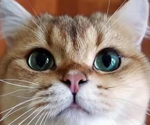 adorable, cat, and furry image