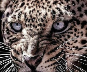 Animales, leopardo, and miedo image